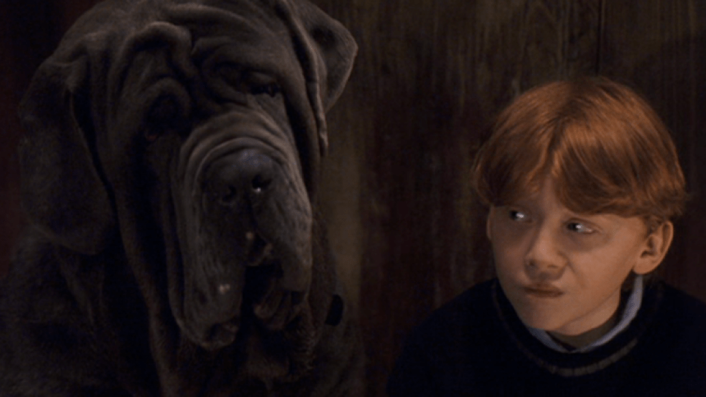 fang harry potter The 101 Greatest Dogs in Film History