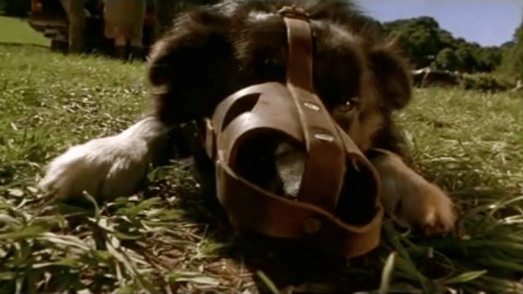 rex babe The 101 Greatest Dogs in Film History