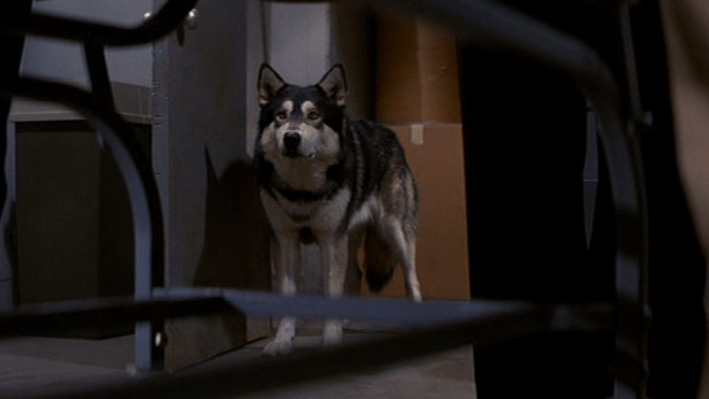 the thing 1982 john carpenter dog The 101 Greatest Dogs in Film History