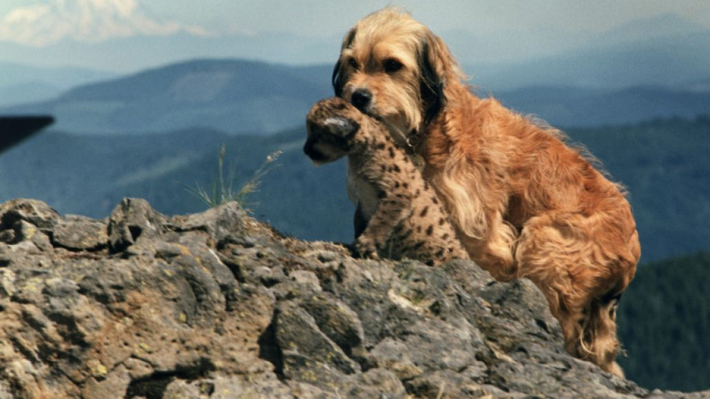 benji the hunted The 101 Greatest Dogs in Film History