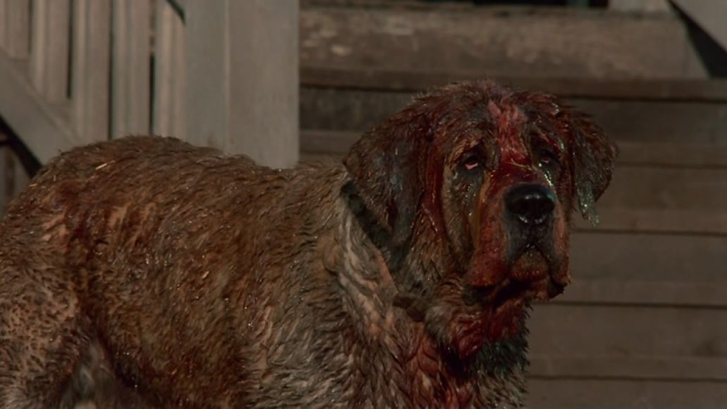 bloody cujo The 101 Greatest Dogs in Film History