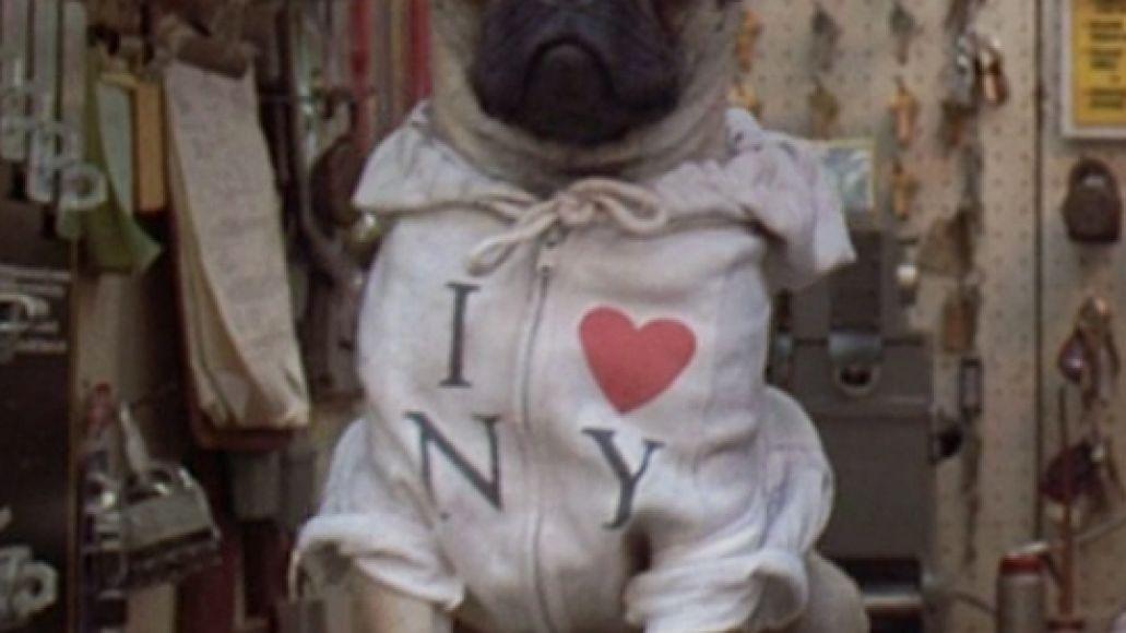 Frank-the-pug_SS_01