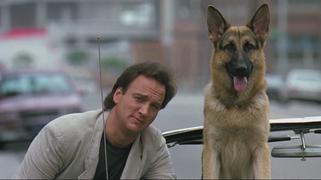 k9 belushi dog The 101 Greatest Dogs in Film History