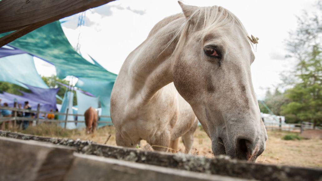 horse hello-colin-mclaughlin-01