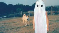 stranger in the alps Phoebe Bridgers Punisher Establishes the Songwriter as a Singular Voice: Review