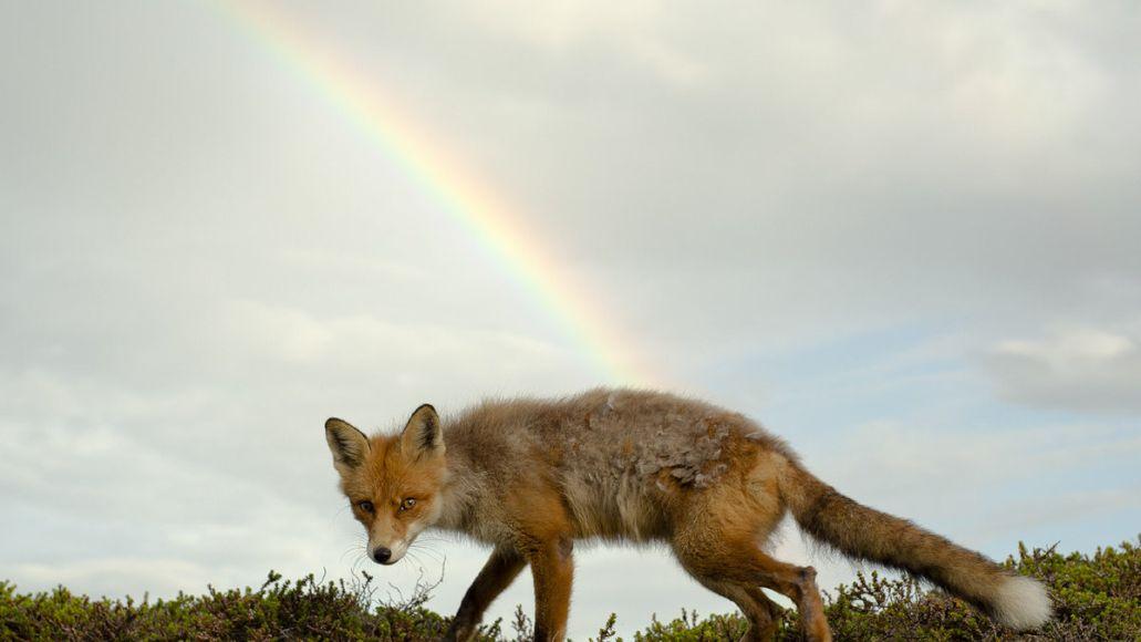 Buck Meek Album Cover Fox Rainbow