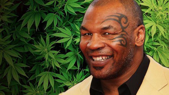 Mike Tyson hosting marijuana-themed music festival