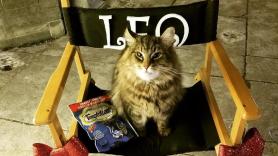 Leo the Cat, star of Pet Sematary
