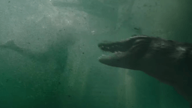 Alejandre Aja, Crawl, Trailer, Screenshot