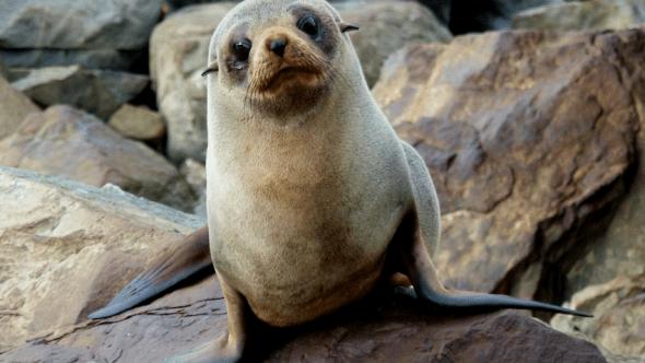Seal Star Wars Twinkle Little Star John Williams