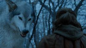 Direwolves in Game of Thrones