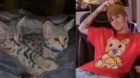 Justin Bieber with his new exotic cats Sushi and Tuna