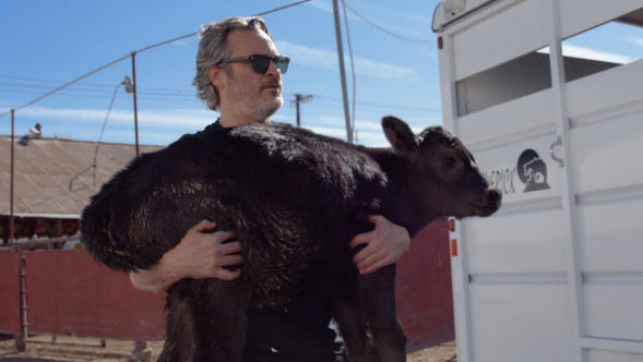 joaquin phoenix calf cow slaughterhouse video vegan