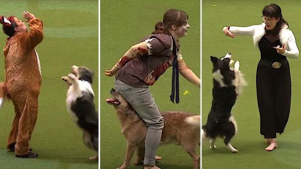 Dogs Dancing Competitively to Music