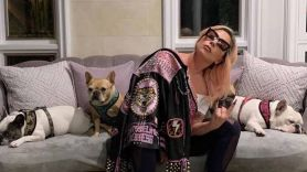 Lady Gaga with her bulldogs