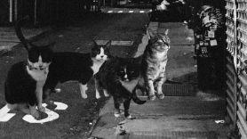 Cattera cat metal band