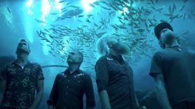 Mastodon Aquarium Livestream