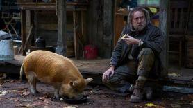Pig (NEON)