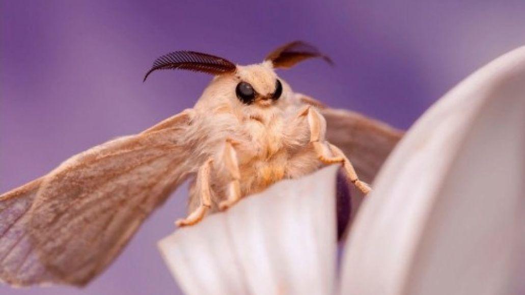slothrust parallel timeline album stream origins moth